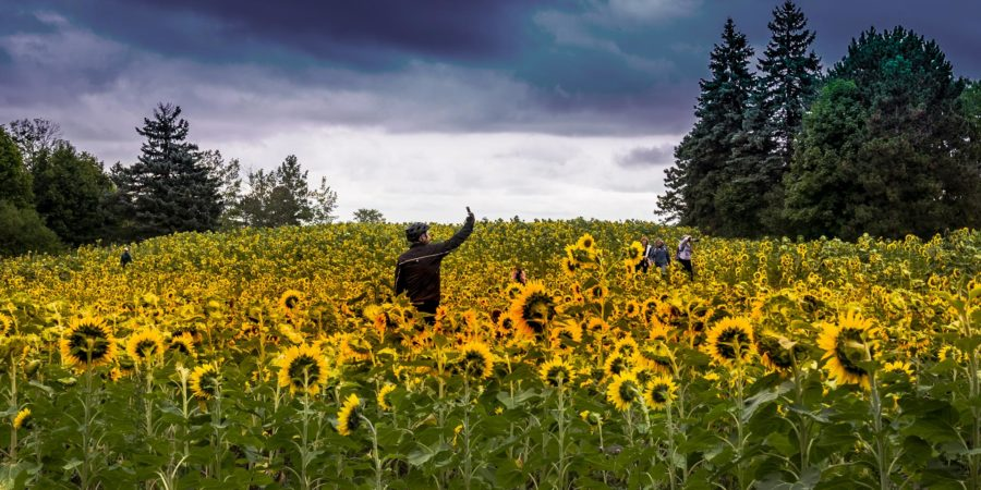 hello_sunshine-sunflower-field